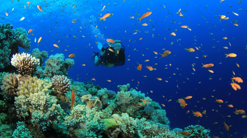 scuba_diving_gb
